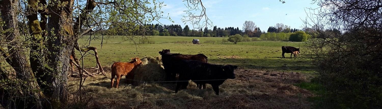 Rinderhaltung schnörkellos, einfach und tiergerecht
